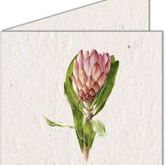 Greeting Card   Protea