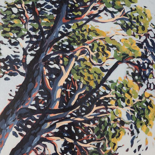 Bluegum Trees at Lion's Head