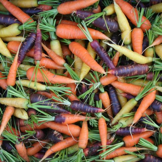 Heirloom Mixed Baby Carrots