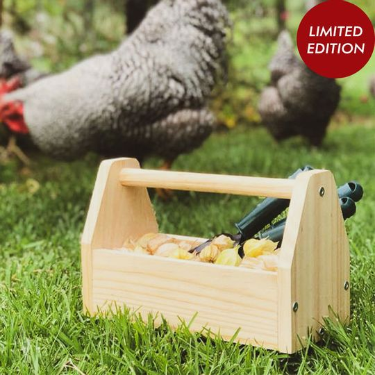 Little Explorer's Box - Limited Edition