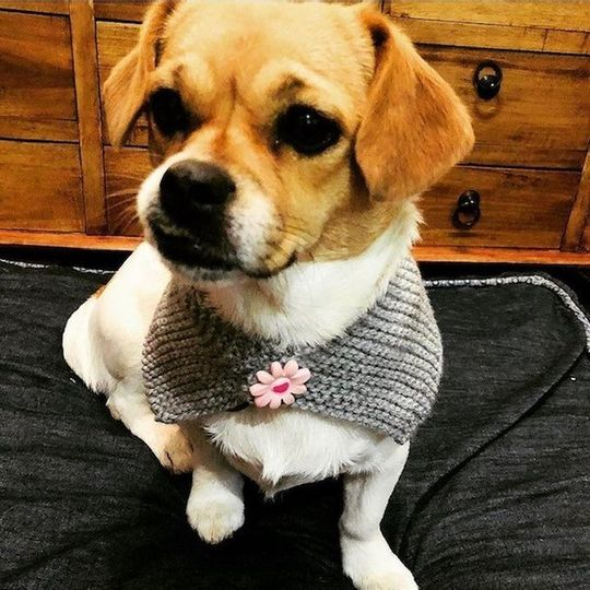 Dog Scarf Grey