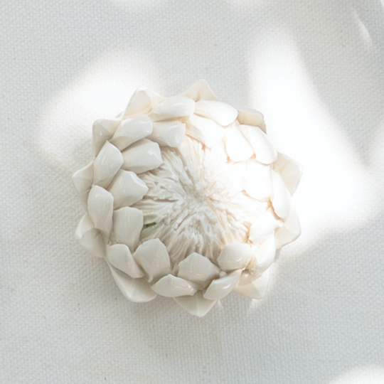 King Protea Paper Weights