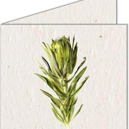 Greeting Card | Green Protea