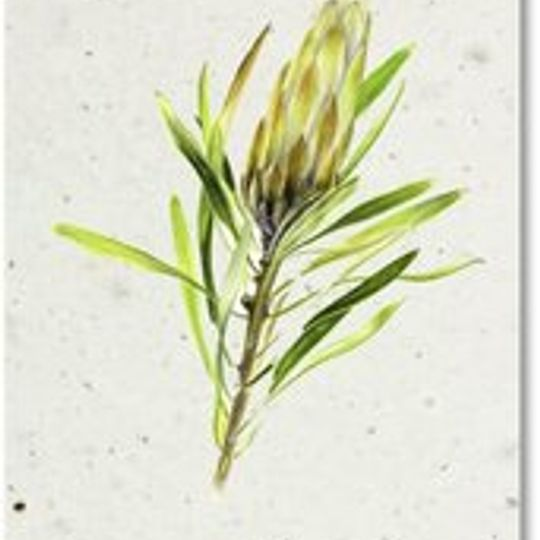 Bookmark | Green Protea