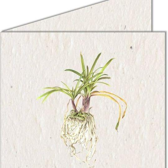 Greeting Card | Botanical Plant