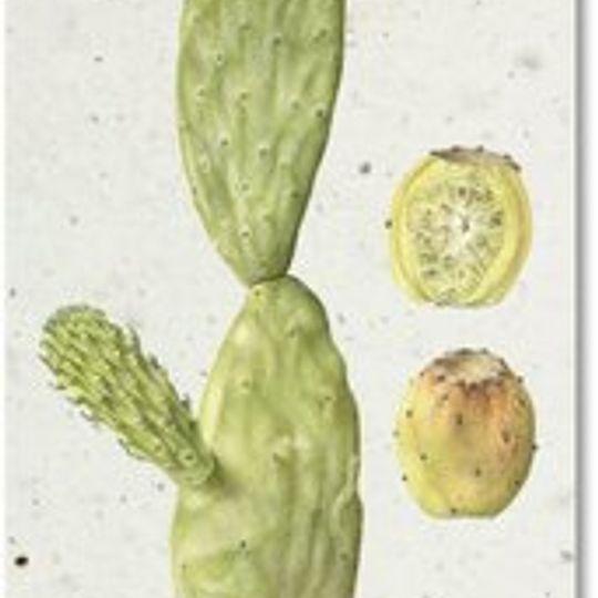 Bookmark | Prickly Pear
