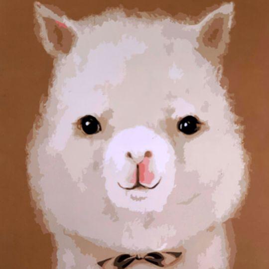 Alpaca waca