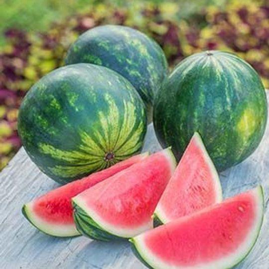 Melon-Watermelon Small