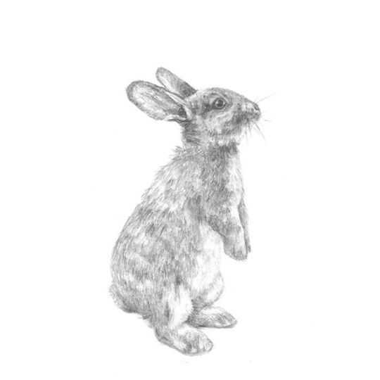 Hand - Sketched Baby Bunny Decal