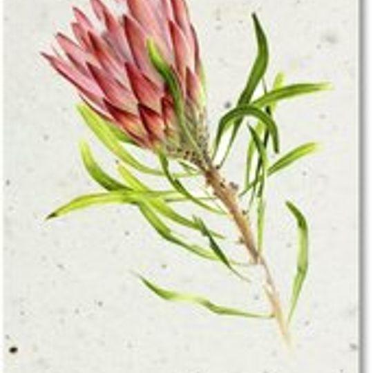 Bookmark | Protea