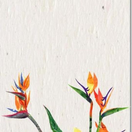 Greeting Card   Strelitzia