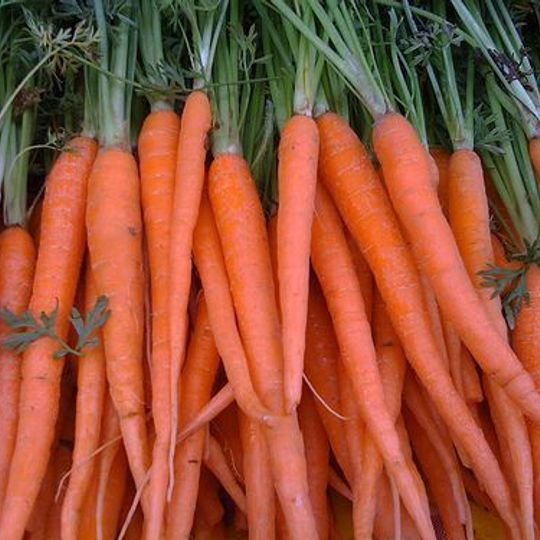 Organic Carrots - Baby