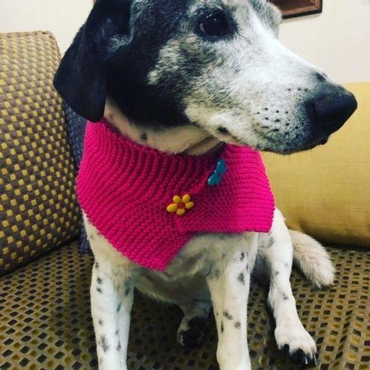 Dog Scarf Pink