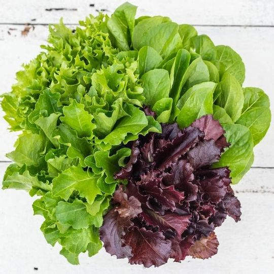 Woza Herbs Baby Leaf Lettuce