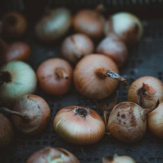 Onions +- 1Kg Conventional