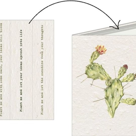 Notebook | Cactus