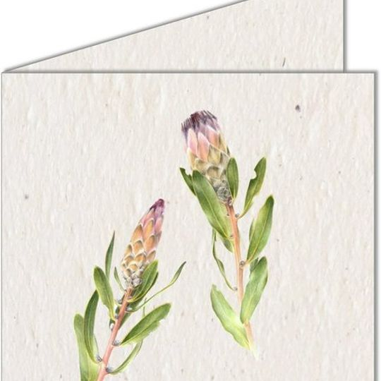 Greeting Card | Two Proteas