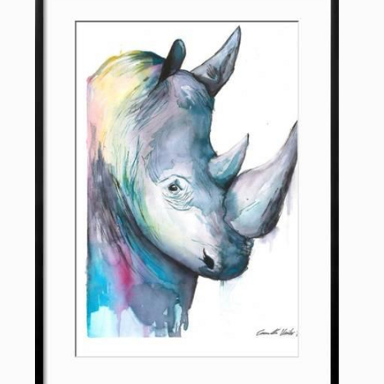 Colourful Rhino