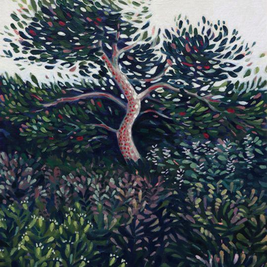 Dream-tree Lagnes