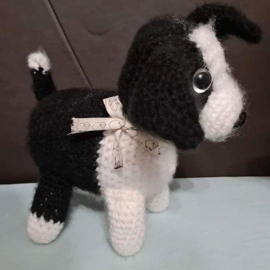 Chunky Border Collie Dog