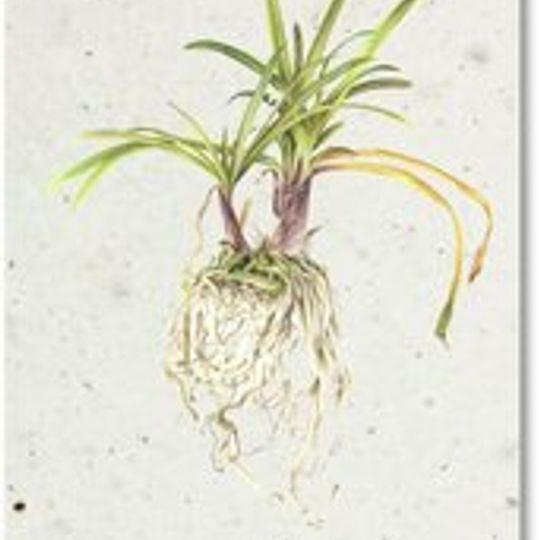 Bookmark | Botanical Plant