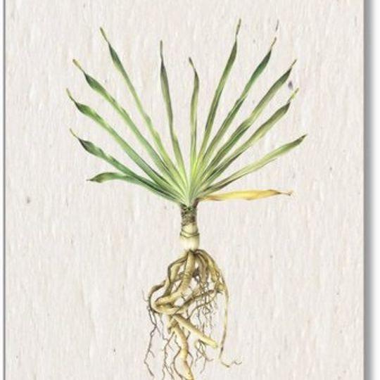 Set of 5 tags | Botanical