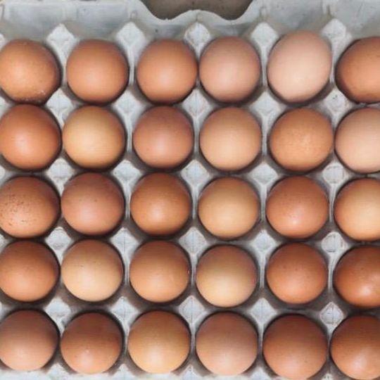 Tray of 30 Eggs. (Large) Free Range.